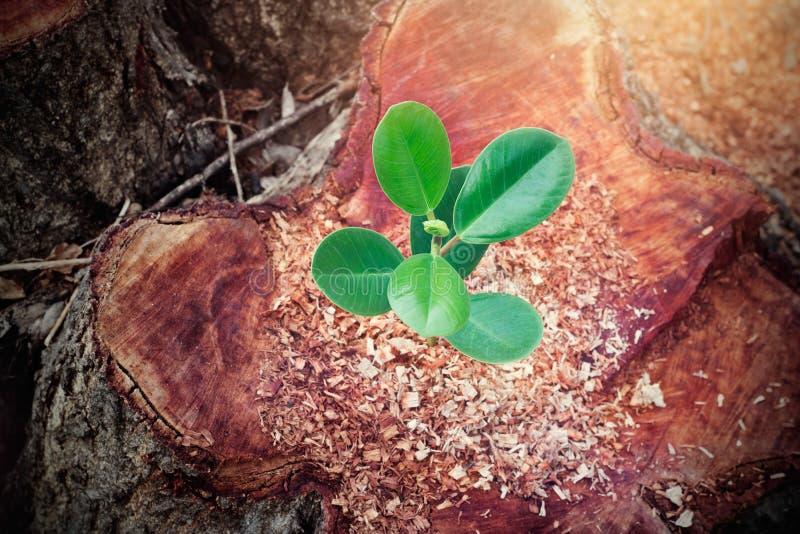 Weinig boom het groeien op verminderd van grote boom stock afbeeldingen