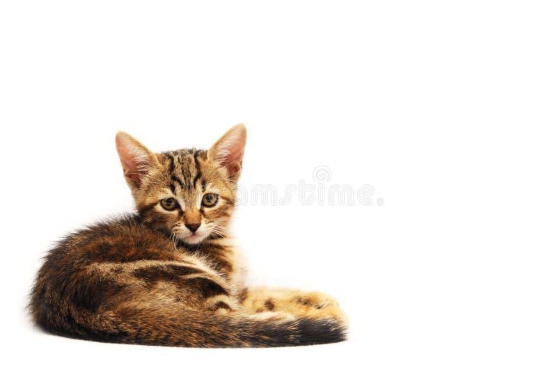 Weinig bruin katje royalty-vrije stock afbeelding