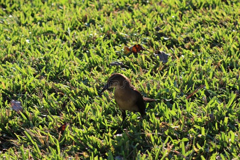 Weinig bruine vogel stock foto