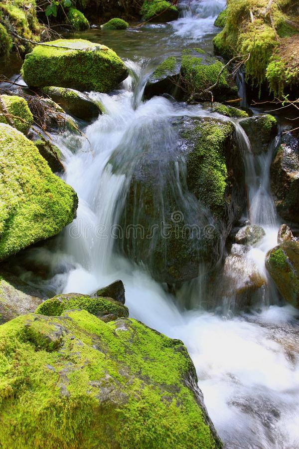 Weinig Cascade in Onderstel Rainier National Park, Washington stock afbeeldingen