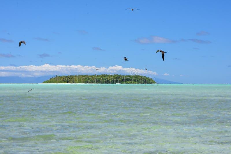 Weinig eiland, Bora Bora royalty-vrije stock foto's