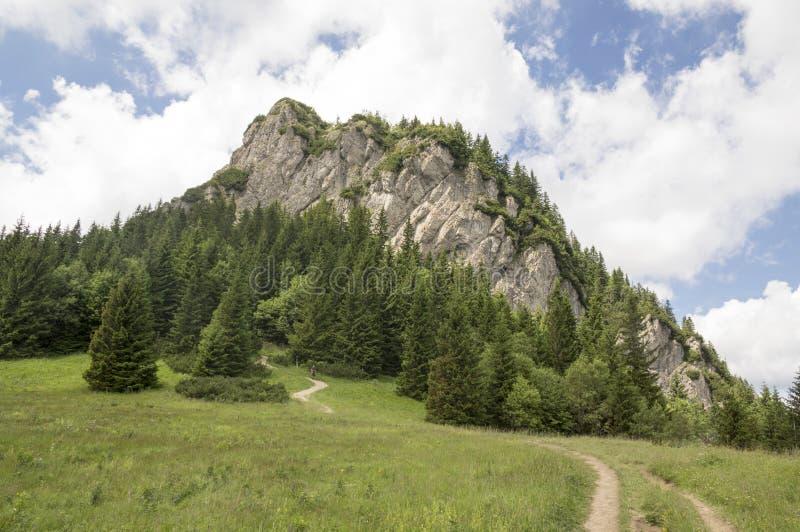 Weinig Fatra-de bergen, Lesser Fatra-bergen, nationaal park in de zomer, zetten genoemde Maly Rozsutec op stock foto