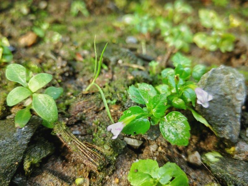 Weinig flora en varen royalty-vrije stock afbeeldingen