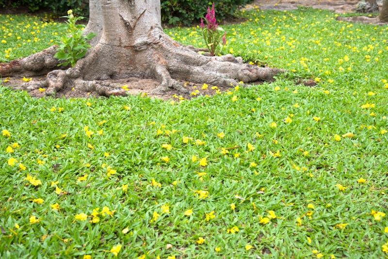 Weinig gele bloem op groene bladerenachtergrond royalty-vrije stock fotografie