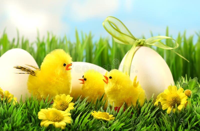 Weinig gele Pasen kuikens in het lange gras stock foto's