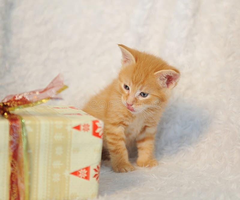Weinig gemberkatje op witte pluizige deken met Kerstmisgift De stemming van Kerstmis stock fotografie