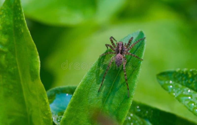 Weinig gemeenschappelijke spin in de tuin stock fotografie