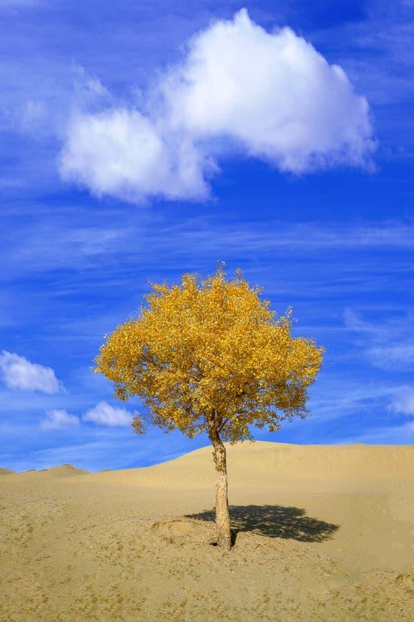 Weinig Gouden populusboom in daling, met blauwe hemel stock fotografie