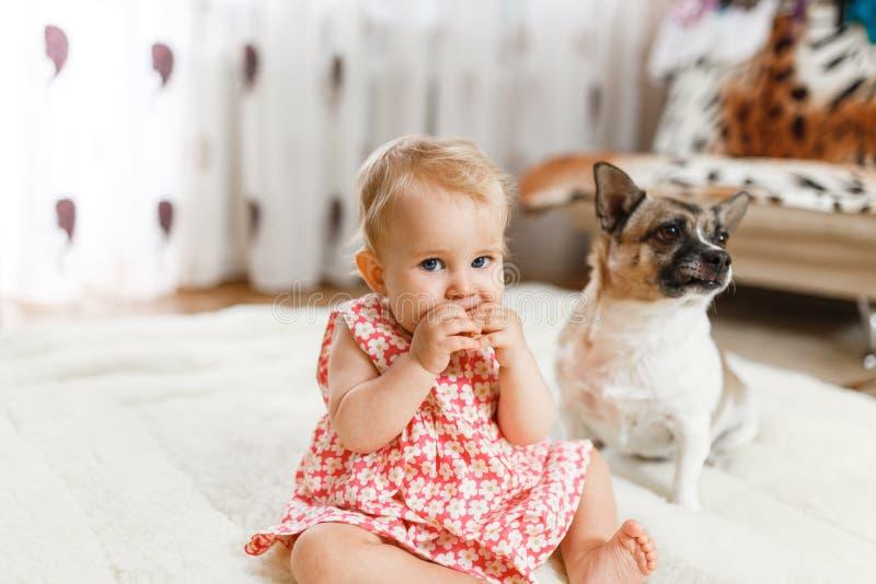 Weinig grappig Kaukasisch meisje het kind zit thuis op de vloer op een licht tapijt met de beste vriend van de helft-ras hond met stock afbeelding