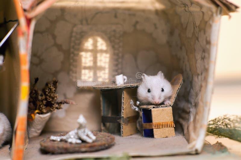 Weinig grappige hamster op het bed in klein veronderstelt huis stock foto's