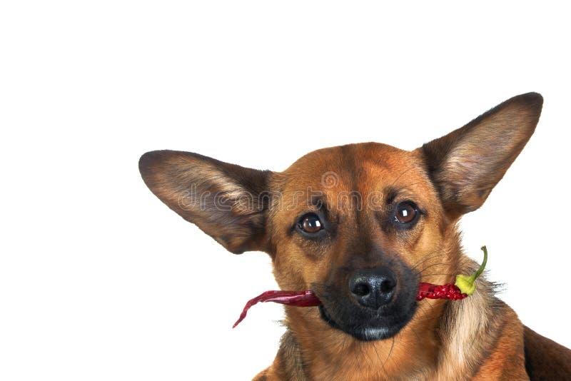 Weinig grappige hond royalty-vrije stock fotografie
