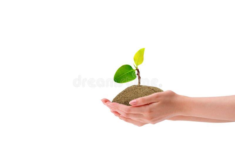 Weinig groene groei van de spruitboom in bruine die grondgreep met de hand op witte achtergrond wordt ge?soleerd royalty-vrije stock foto