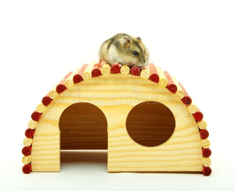 Weinig hamster royalty-vrije stock foto