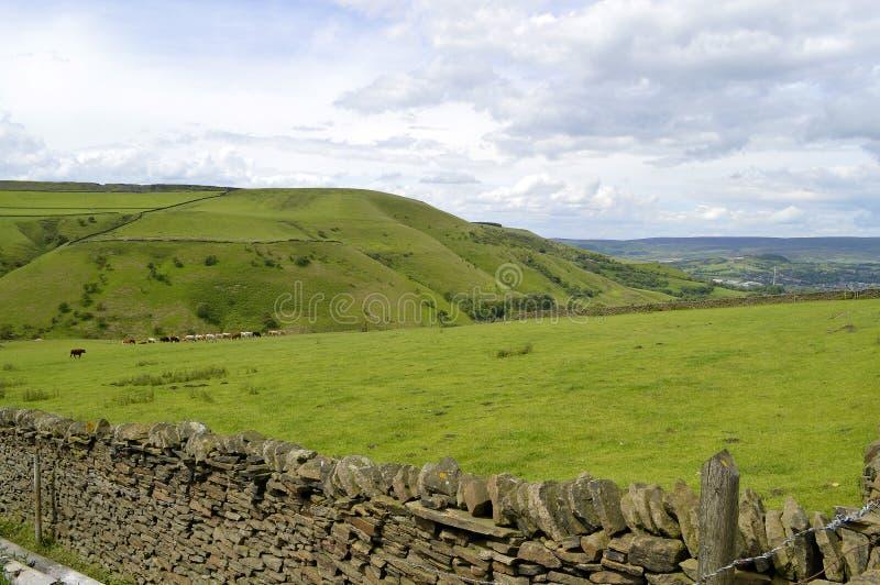 Weinig Hayfield in Derbyshire stock foto