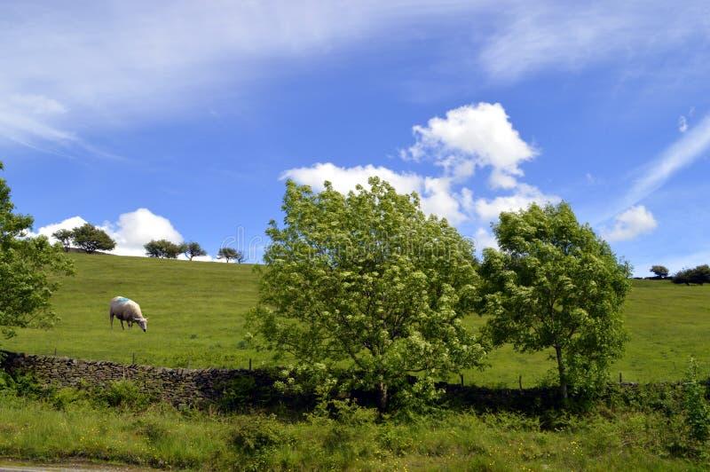 Weinig Hayfield in Derbyshire stock foto's