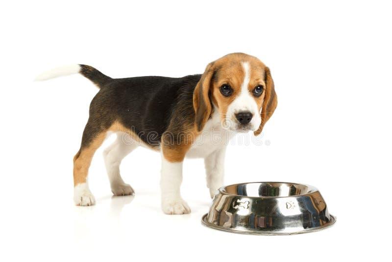 Weinig het leuke hond eten stock foto