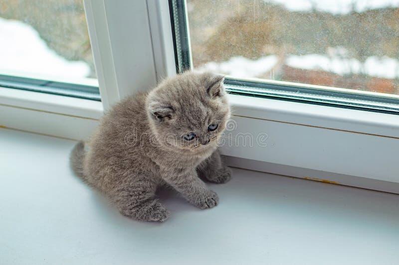 Weinig het pluizige katje spelen royalty-vrije stock foto's