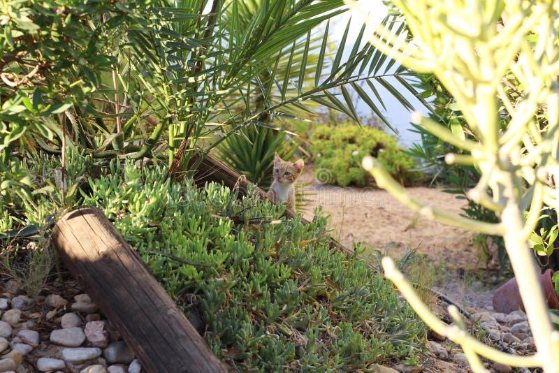 Weinig het rode katje spelen in het gras Aard, veel groen stock fotografie