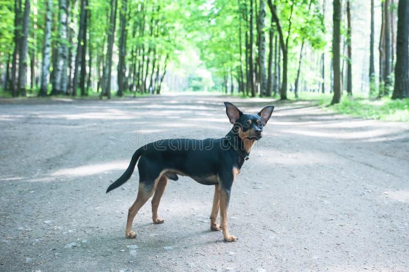 Weinig hond in het park op de weg De hond werd verloren de hond wa royalty-vrije stock foto