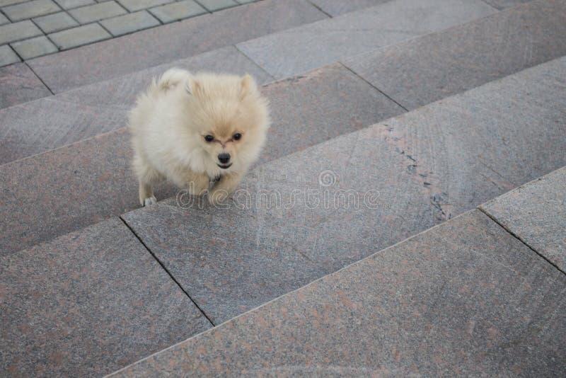 Weinig Hond loopt op de treden royalty-vrije stock afbeeldingen