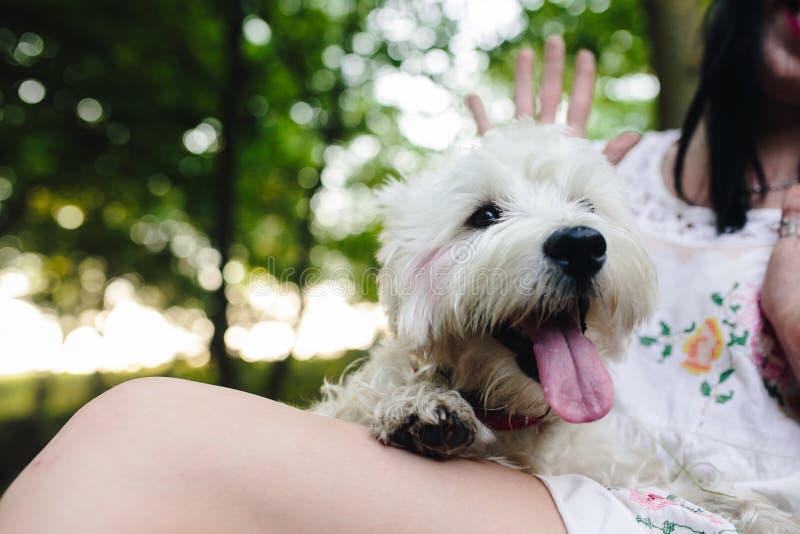 Weinig hond met een meisje stock afbeelding