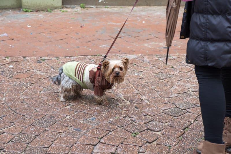 Weinig hond op de straten van Tel Aviv royalty-vrije stock afbeeldingen