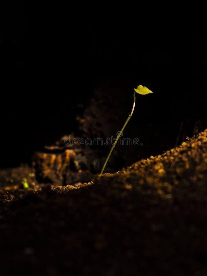 Weinig installatie het groeien in onwaarschijnlijke donkere plaats stock foto