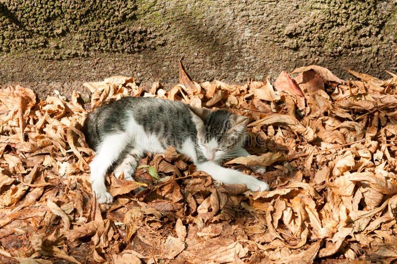 Weinig jong katje ligt op de oranje droge bladeren en geniet van in de mooie zonnige dag royalty-vrije stock foto's