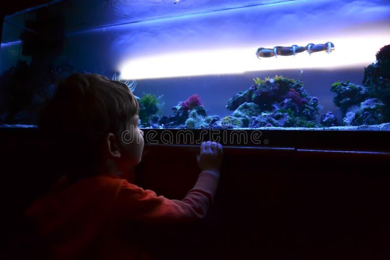 Weinig jongen in aquarium royalty-vrije stock fotografie