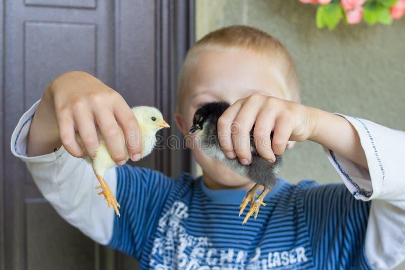 Weinig jongen die een kip houden stock fotografie