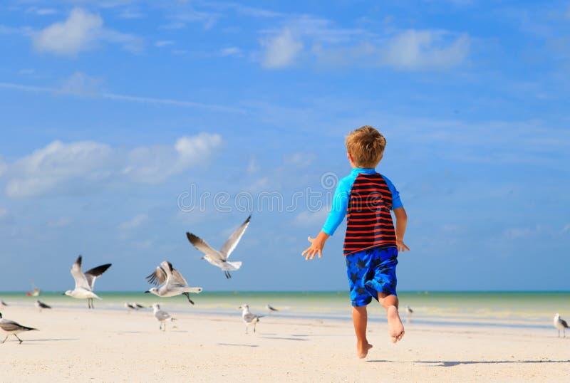 Weinig jongen die met zeemeeuwen op strand spelen stock afbeelding