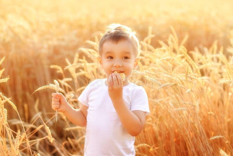 Weinig jongen die van het land brood op het tarwegebied eten onder gouden aren in zonlicht Gelukkig rustiek het leven en landbouw royalty-vrije stock foto's