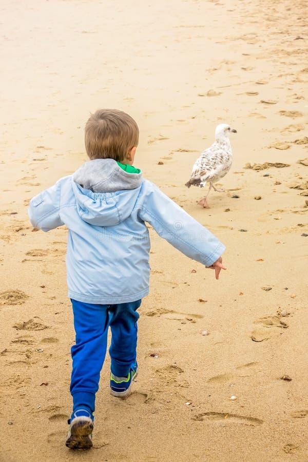 Weinig jongen die zeemeeuw op het strand achtervolgen royalty-vrije stock fotografie
