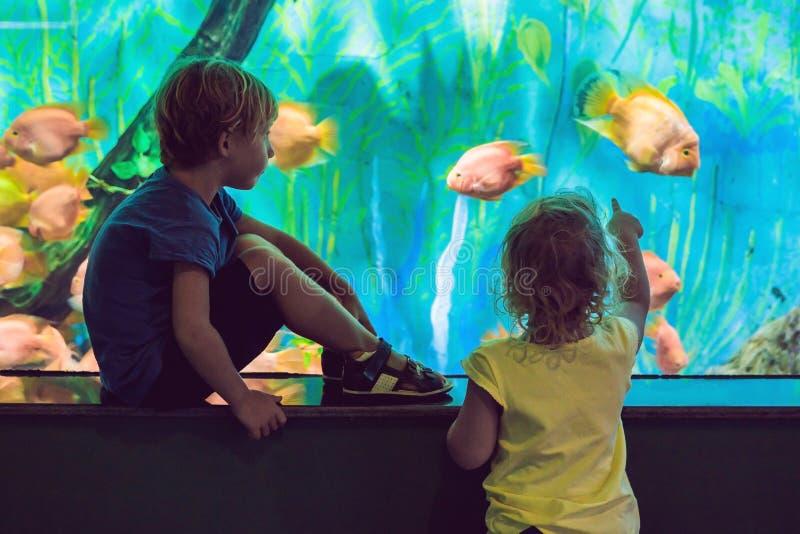 Weinig jongen en meisje die op tropisch koraal letten vissen in grote overzeese het levenstank Jonge geitjes bij het dierentuinaq stock foto