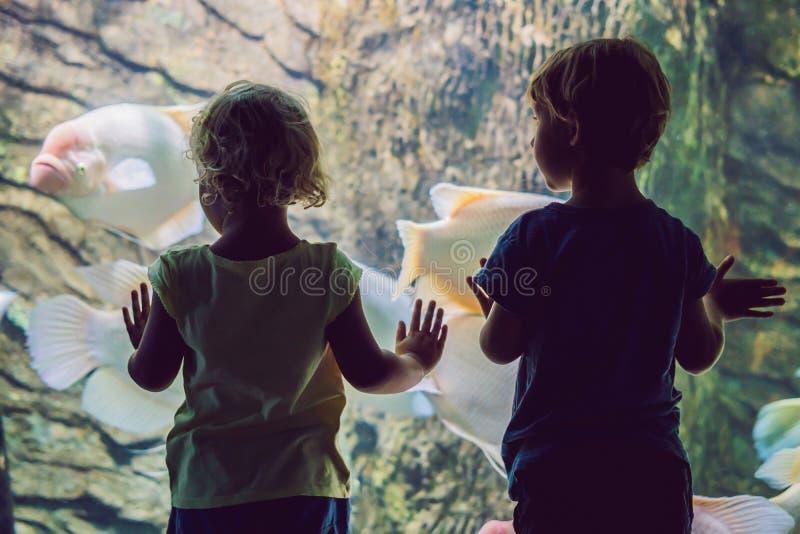 Weinig jongen en meisje die op tropisch koraal letten vissen in grote overzeese het levenstank Jonge geitjes bij het dierentuinaq stock fotografie