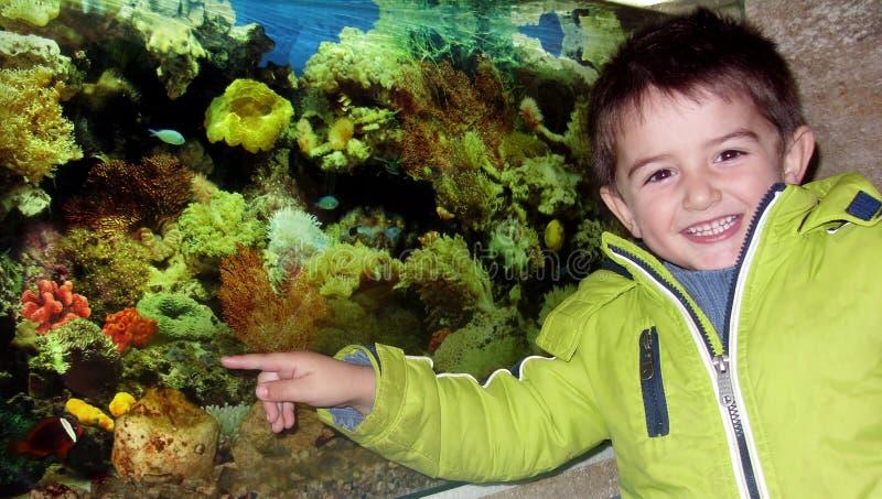 Weinig jongen in het aquarium royalty-vrije stock foto