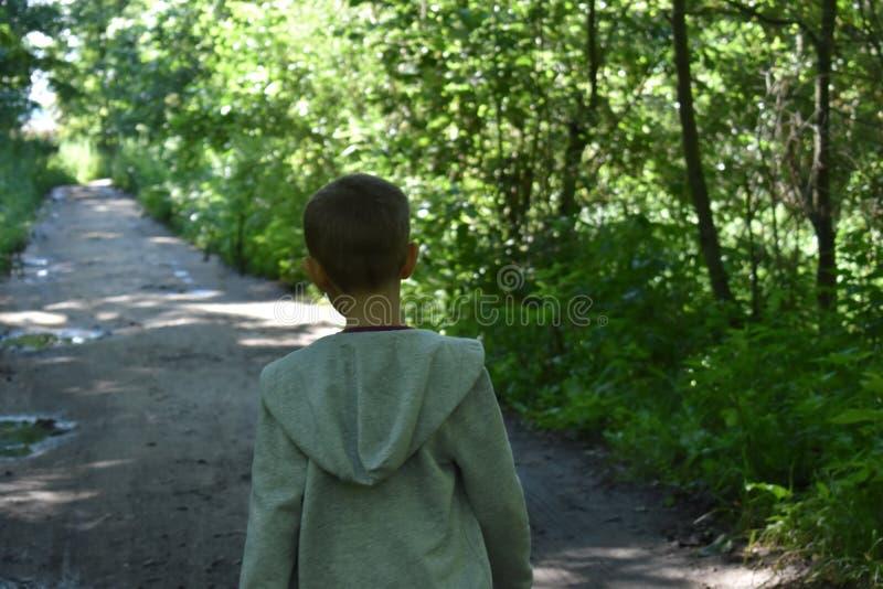 Weinig jongen in het bos op de zomer stock afbeeldingen