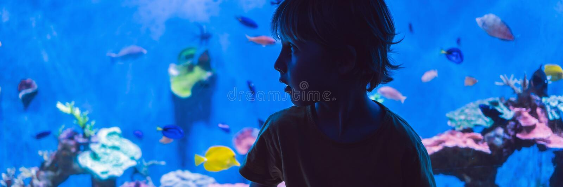 Weinig jongen, jong geitje die op de ondiepte van vissen letten die in oceanarium, kinderen zwemmen die van het onderwaterleven i royalty-vrije stock fotografie