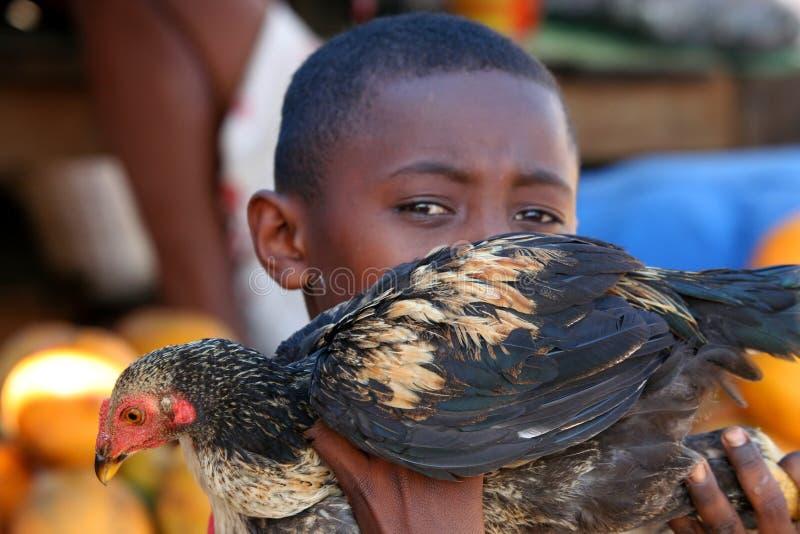 Weinig jongen met een kip royalty-vrije stock fotografie