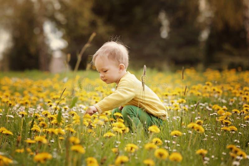 Weinig jongen op de de lenteweide royalty-vrije stock fotografie