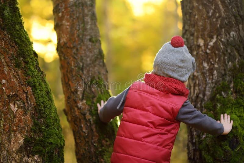 Weinig jongen tijdens wandeling in het bos bij zonnige de herfstdag stock afbeeldingen