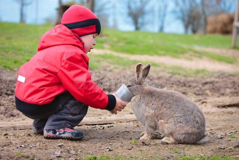 Weinig jongen voedt een konijn royalty-vrije stock foto's