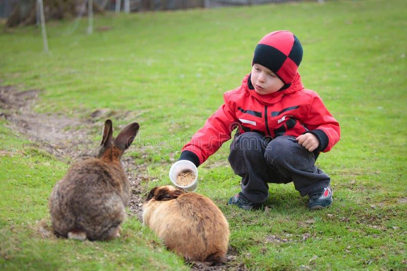 Weinig jongen voedt een konijn royalty-vrije stock afbeeldingen