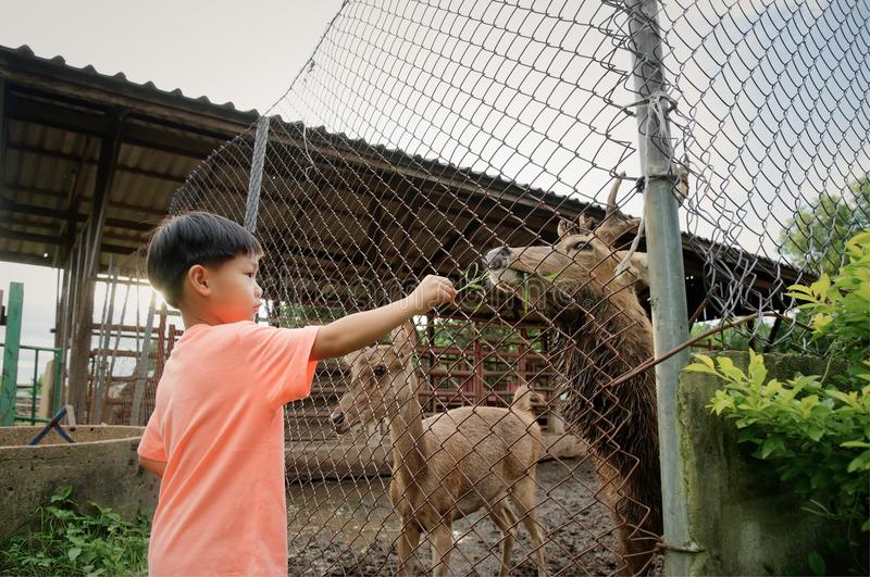 Weinig jongens voedend hert in landbouwbedrijf royalty-vrije stock afbeeldingen