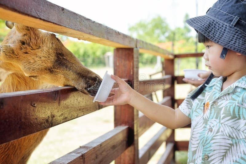 Weinig jongens voedend hert in landbouwbedrijf: Close-up royalty-vrije stock foto's