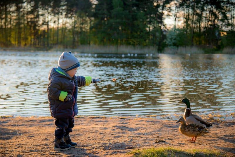 Weinig jongens voedende vogels dichtbij meer royalty-vrije stock afbeeldingen
