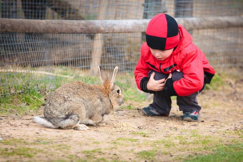 Weinig jongensspel met een konijn stock foto's