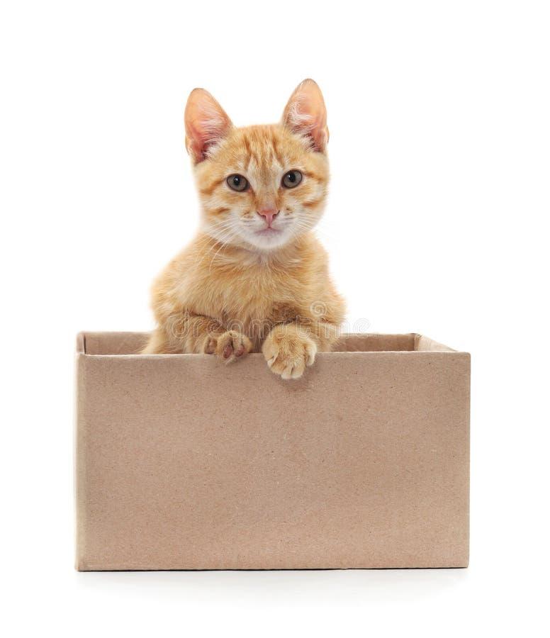 Weinig kat in de doos stock fotografie