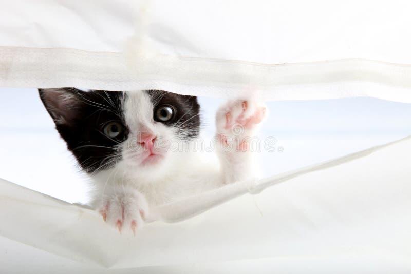 Weinig kat kijkt omhoog door een gordijn royalty-vrije stock fotografie