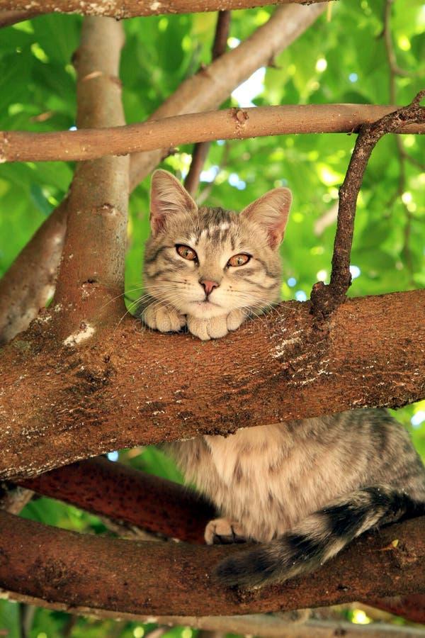 Weinig kat met bruine ogen stock foto